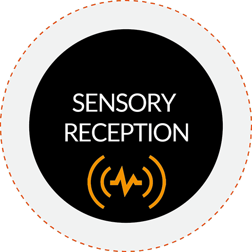 Sensory reception Interference Reaxing Training Method
